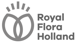 Royal FloraHolland Logo Klantervaring Bigfish Animatie Studio